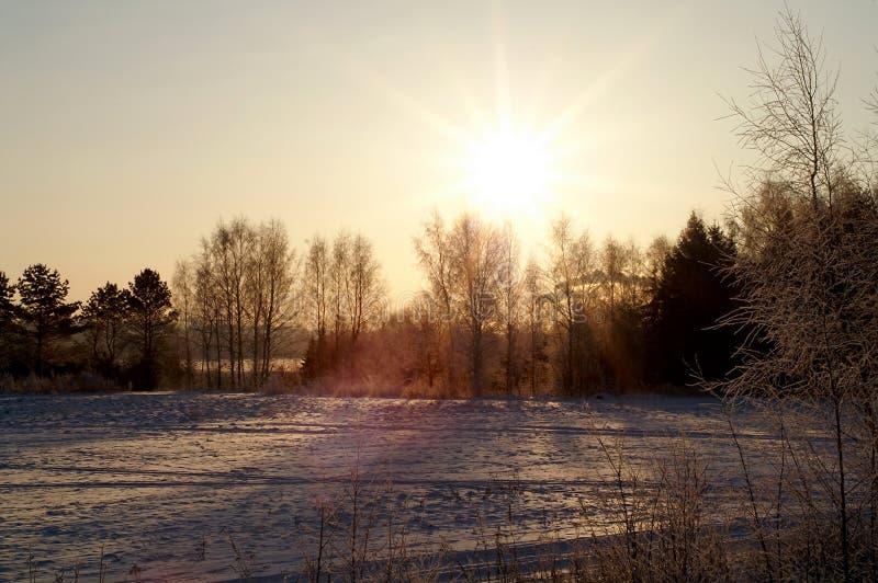 在冻森林的朝阳 库存照片