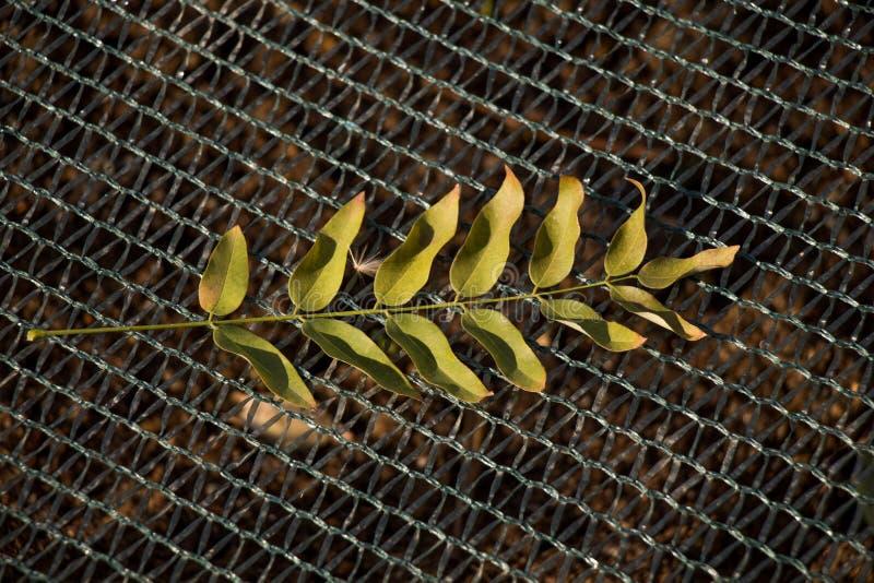 在净背景安置的干燥叶子 免版税库存照片