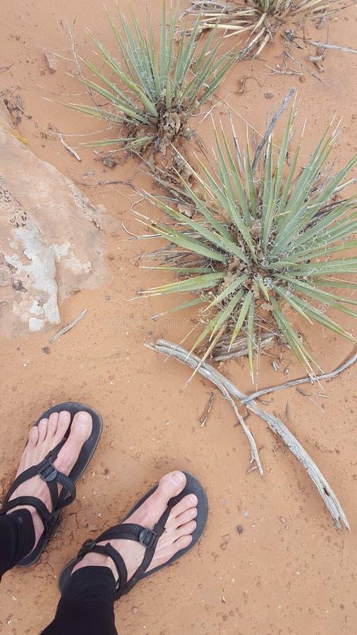 在凉鞋的脚在沙漠 免版税图库摄影