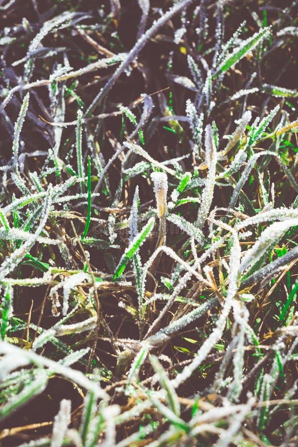 在减速火箭的树冰的绿草 库存照片
