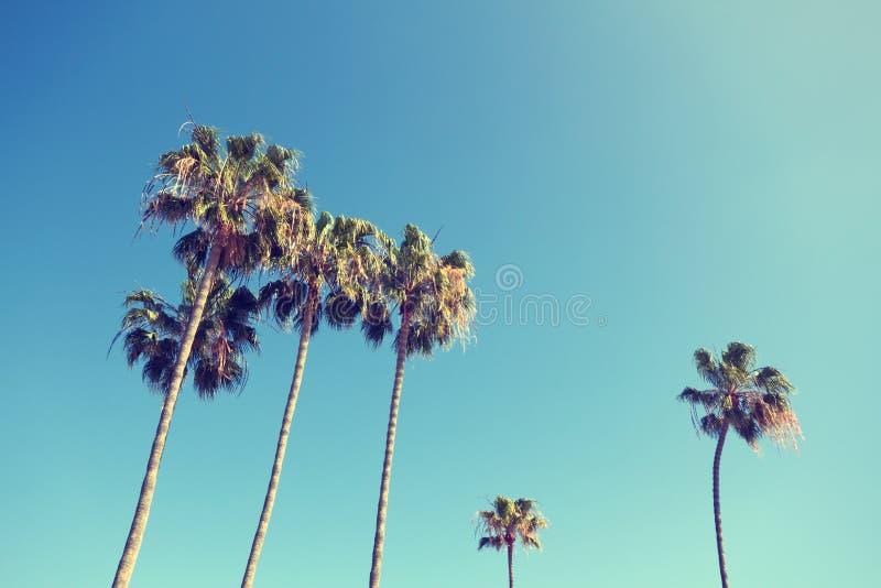 在减速火箭的样式的棕榈树 库存照片