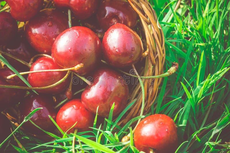 在减速火箭的草的红色樱桃 图库摄影
