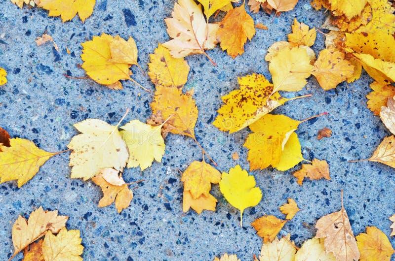 在凝结面背景的五颜六色的黄色秋天叶子 免版税库存照片