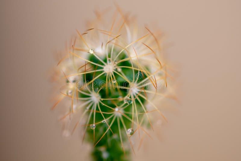 在几张宏观照片去掉的小植物 免版税库存图片