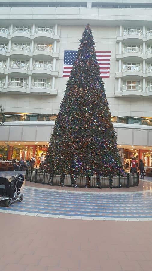 在凯悦的树在奥兰多机场 库存图片