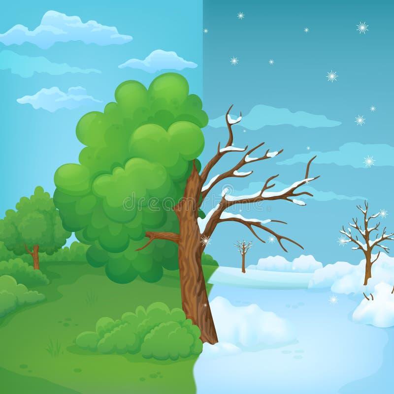在分开的夏天和冬天背景的一半分裂的动画片树 与豪华的绿色叶子的部分和与雪的不生叶的部分 皇族释放例证