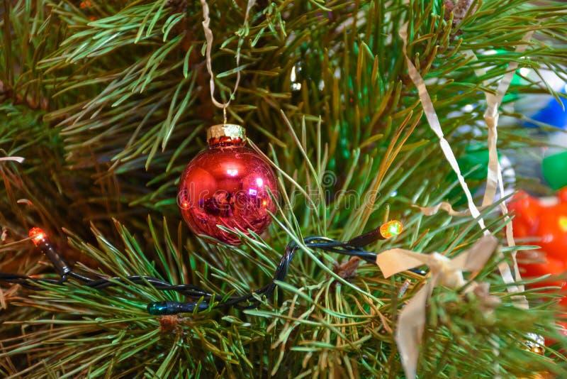 在分支特写镜头的圣诞树玩具 免版税图库摄影