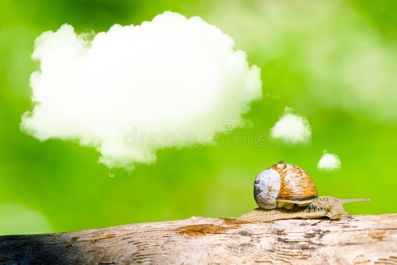 在分支的作白日梦的蜗牛 库存图片
