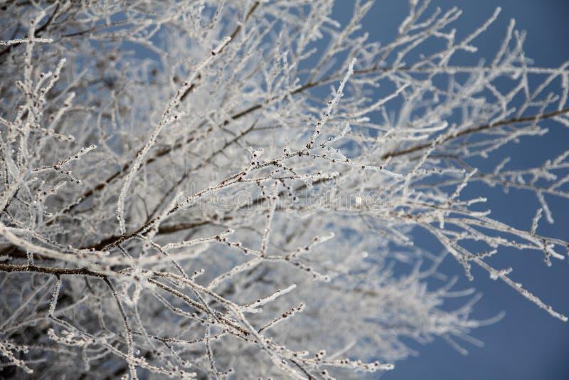 在分支的冬天雪 免版税图库摄影