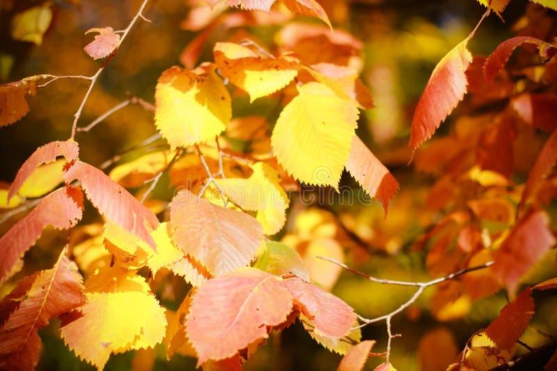 在分支的叶子在秋天森林里 免版税库存照片