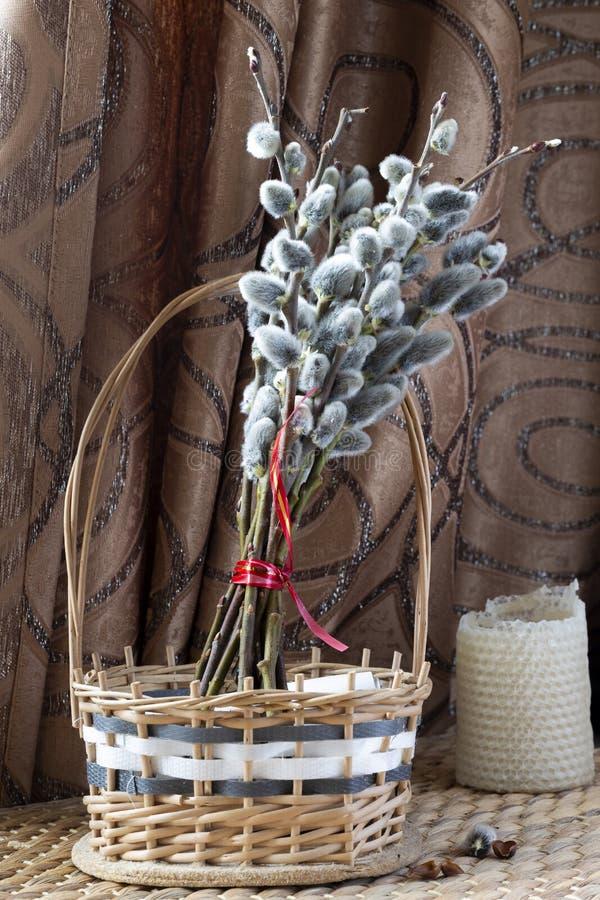 在分支的圆鼓的杨柳芽 免版税图库摄影