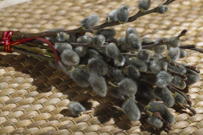 在分支的圆鼓的杨柳芽 免版税库存照片