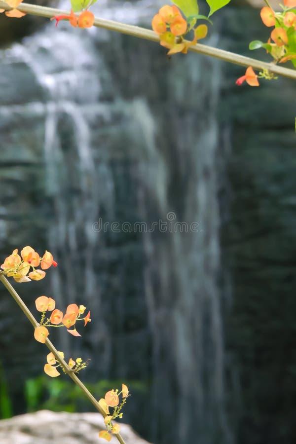 在分支的小橙色和黄色花在豪华的泰国公园` s瀑布前面 库存照片