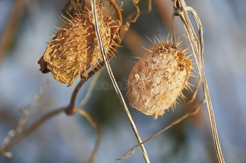 在分支的干燥叶子 凋枯自然 免版税库存照片