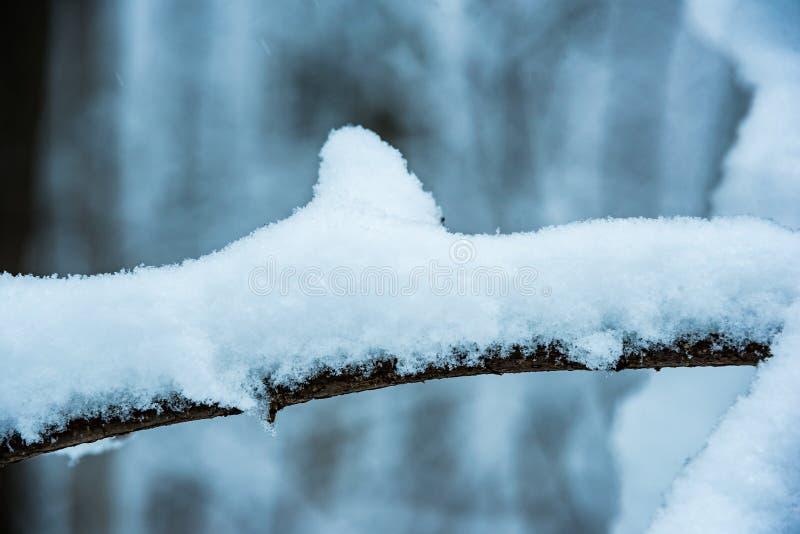 在分支的白色蓬松雪 免版税库存照片