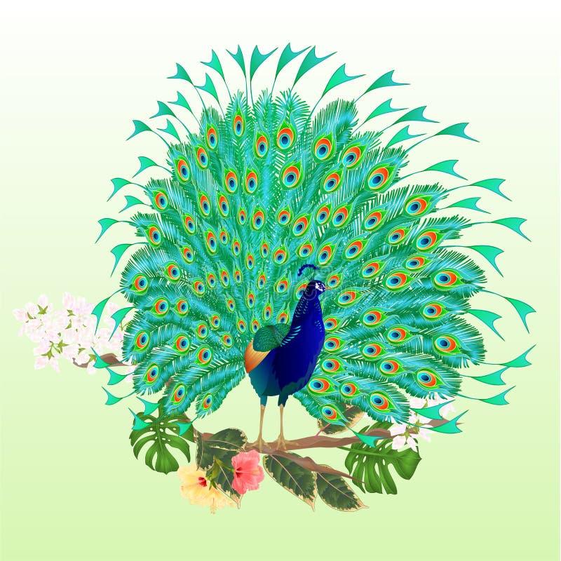 在分支的秀丽孔雀热带鸟与木槿榕属和爱树木的人水彩葡萄酒编辑可能传染媒介的例证 皇族释放例证