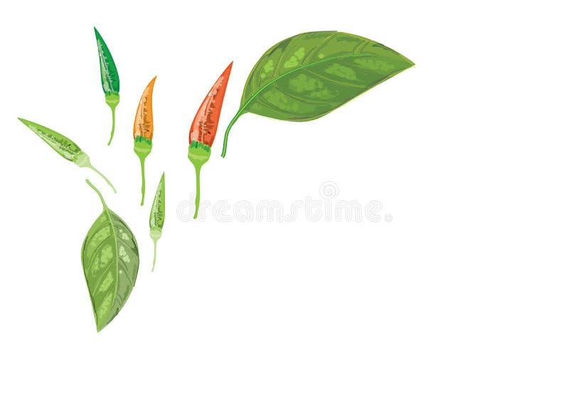 在分支的辣椒与叶子和种子 辣 向量例证