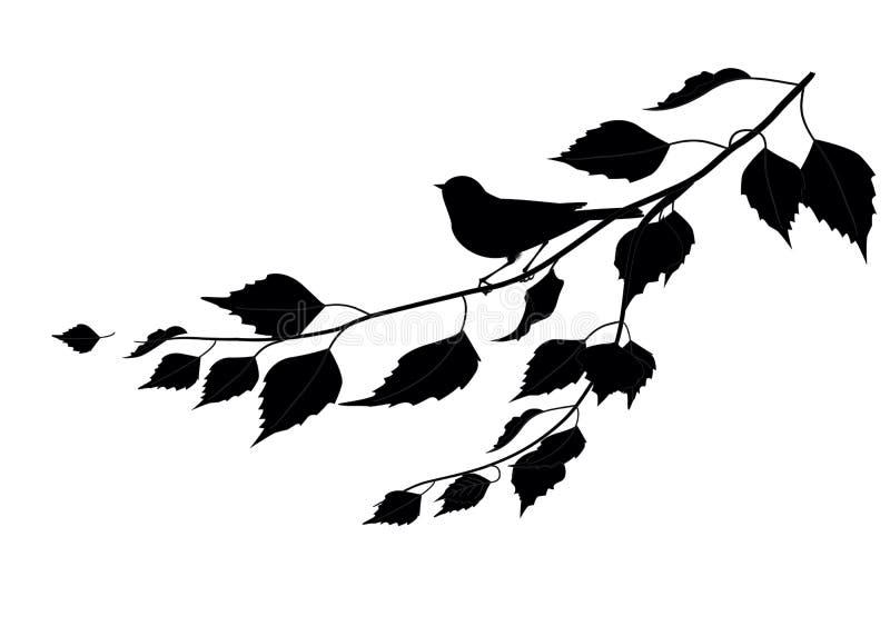 在分支的鸟。剪影 库存照片