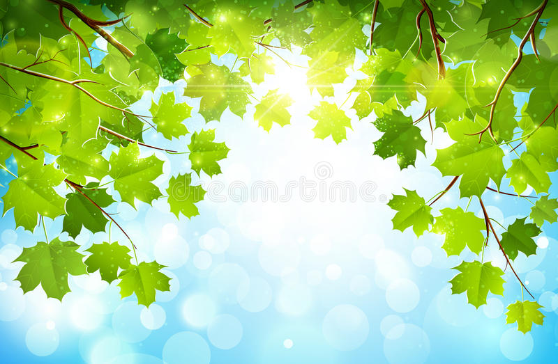 在分支的绿色叶子