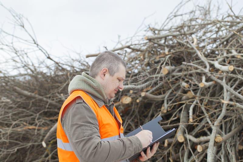 Download 在分支附近的雇员 库存照片. 图片 包括有 行业, 木料, 新近地, 大麦, 砍伐森林, 击倒, 原始, 保护 - 30337134