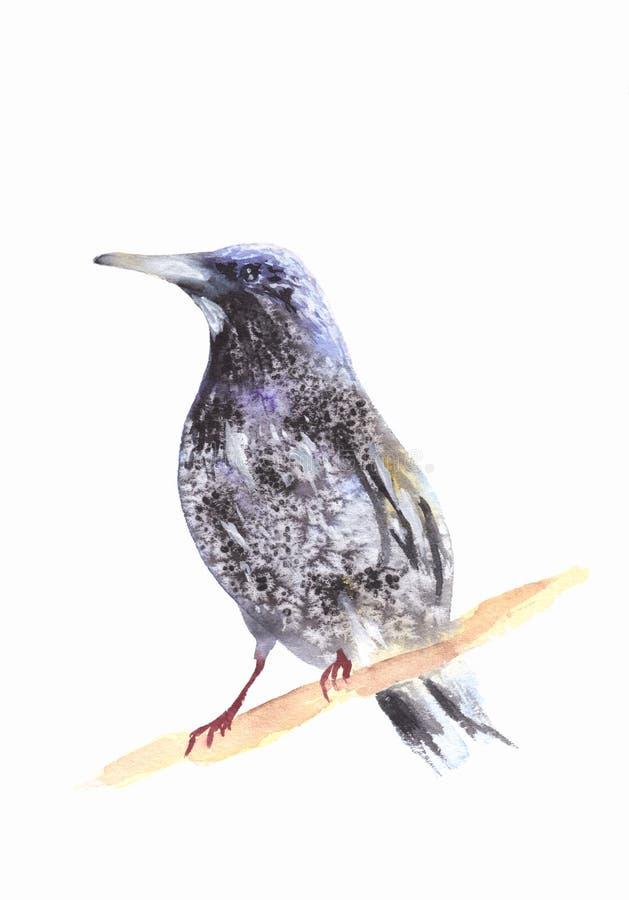 在分行的黑鹂 Ousel绘画 额嘴装饰飞行例证图象其纸部分燕子水彩 库存例证