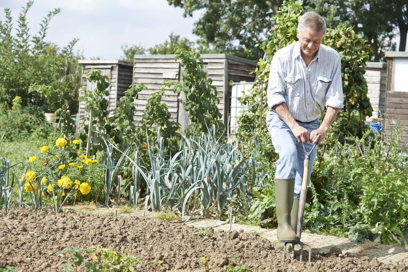 在分配地段的老人开掘的菜园 库存照片