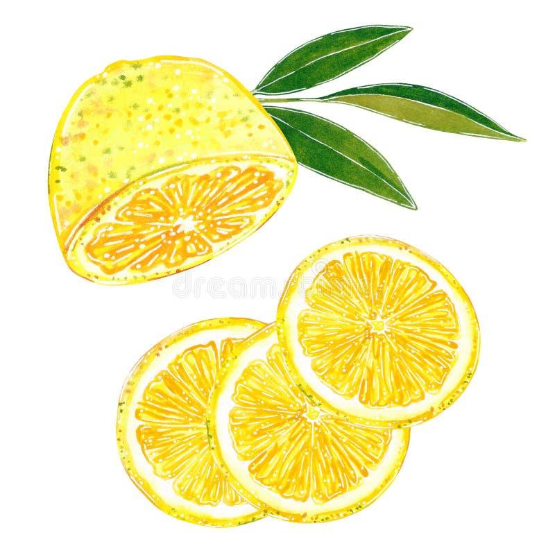 在切片剪贴美术集合的柠檬裁减 手拉的水彩例证 库存例证