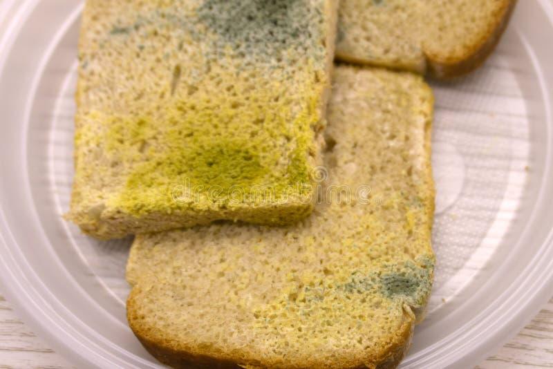 在切片的模子白面包 在食物的模子 与霉的面包 腐烂的食物,面包 宏观透视 没人 商店,家, 免版税库存照片