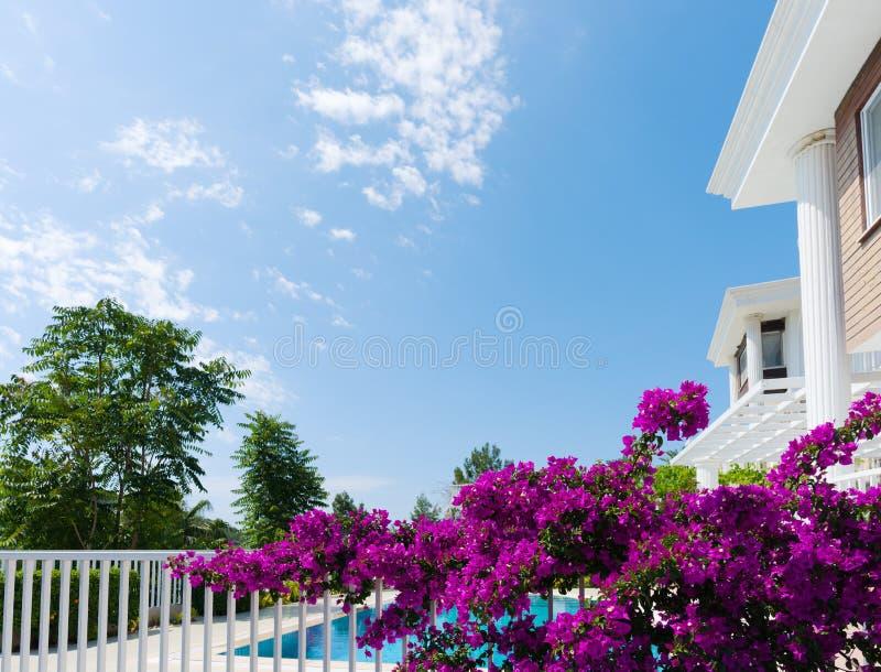 在别墅的暑假 美丽的开花的树在围场 库存图片