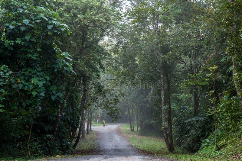 在到森林里 库存照片