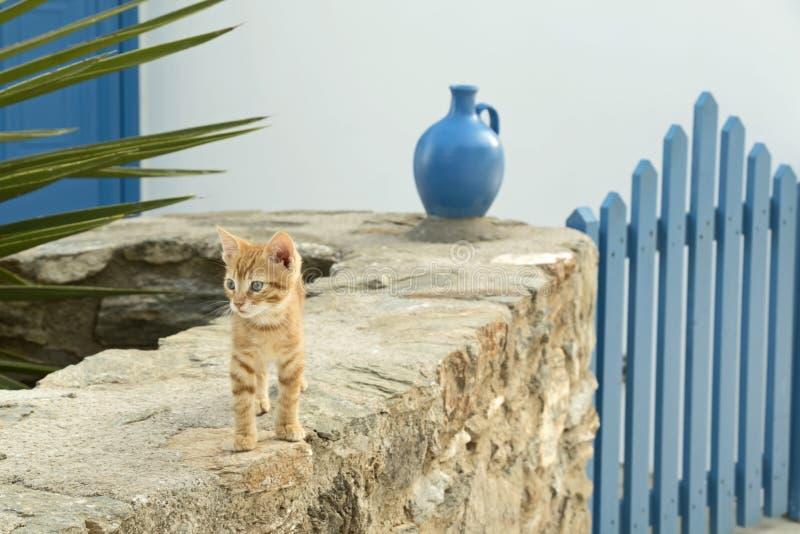 在前政务司官邸入口的小的猫 库存图片