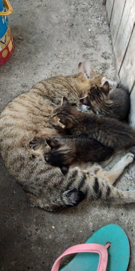 在前面的家猫 免版税库存照片