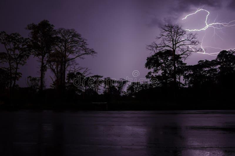 在剧烈的雷暴期间的雷击与树和雨林,喀麦隆,非洲剪影  免版税库存照片