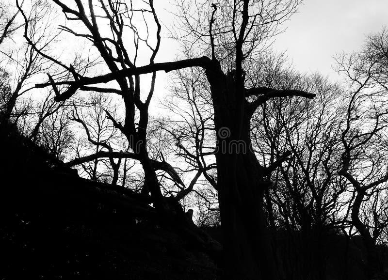 在剪影的大气黑暗的冬天林木与残破的树干和扭转的分支反对暮色天空 免版税库存照片