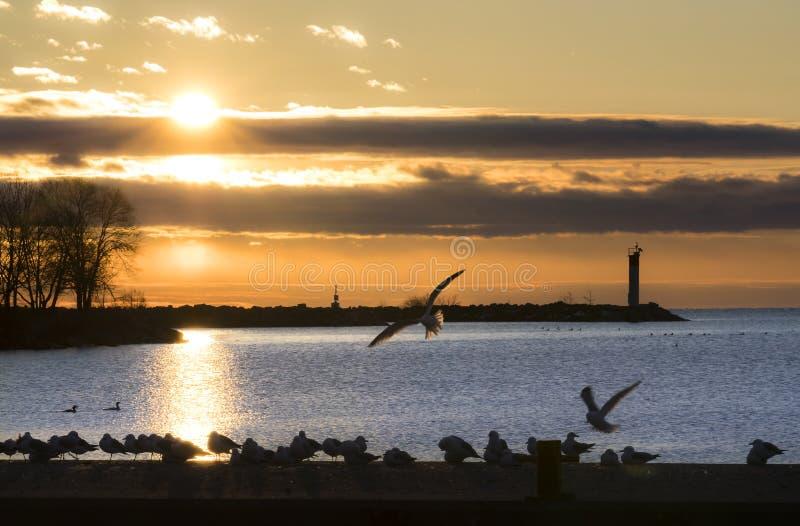 在剪影的许多鸟沿有美丽的橙色sunris的码头 库存图片
