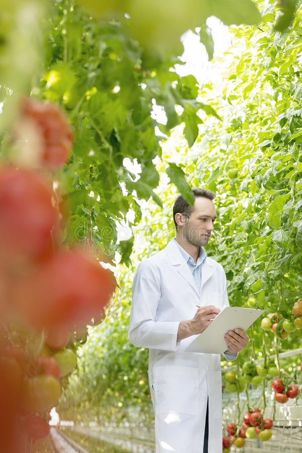 在剪贴板的年轻科学家文字,当检查蕃茄在温室时 库存照片