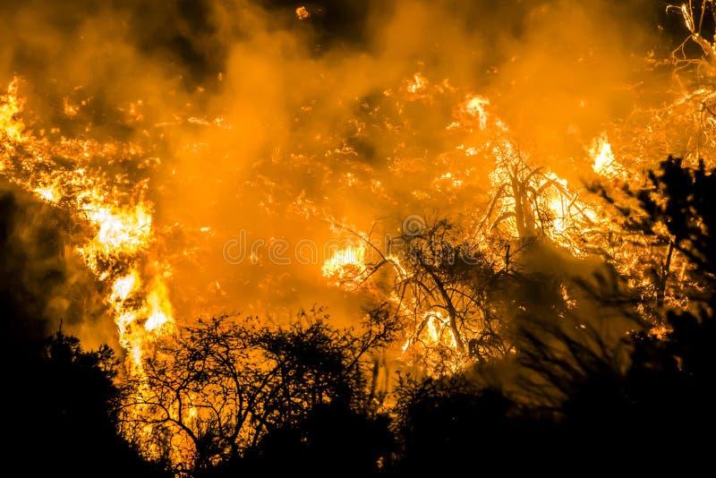 在加利福尼亚火期间,明亮的橙色火焰和炭烬在晚上烧黑刷子 库存照片