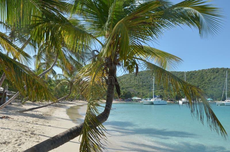在加勒比海滩和猫的倾斜的棕榈树 库存照片