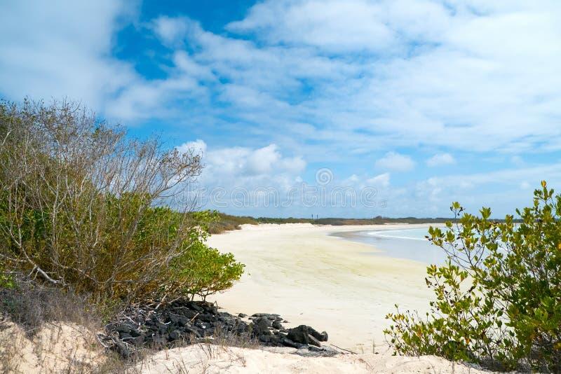 在加拉帕戈斯伊莎贝拉岛海岛,厄瓜多尔上的海滩 库存照片