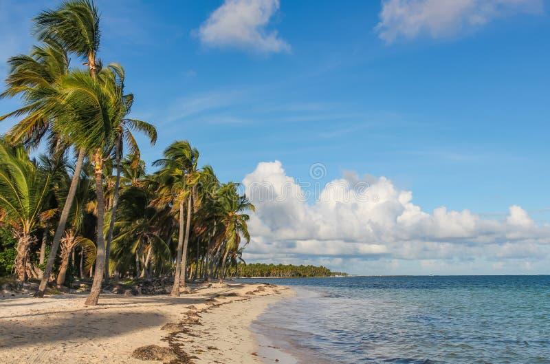 在加泰罗尼亚Bavaro海滩的风和棕榈树在多米尼加共和国 免版税库存照片