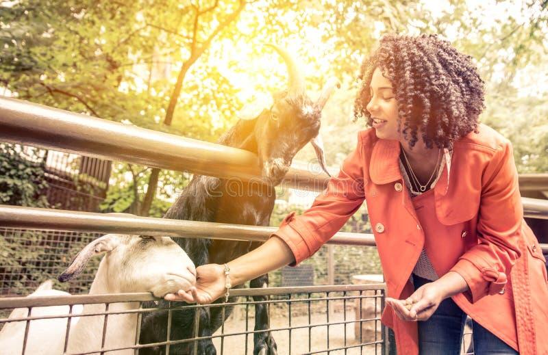 在动物园的少妇哺养的动物 免版税库存图片
