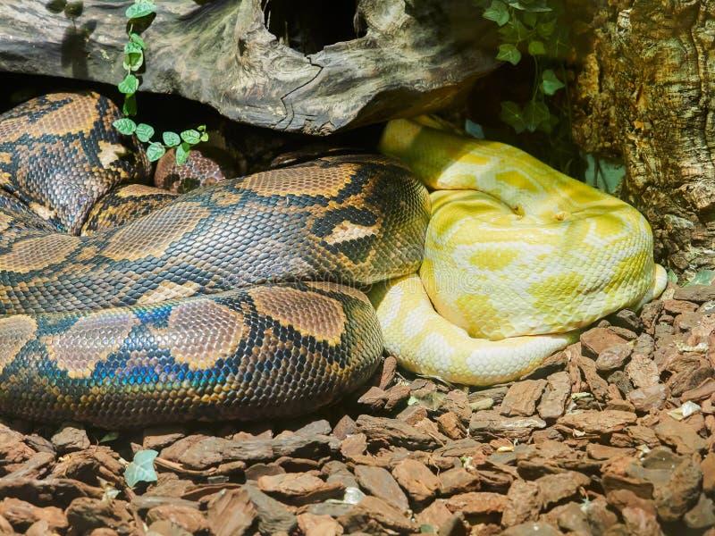 在动物园的缩窄器蛇 免版税库存图片