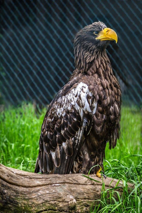 在动物园的鹫 免版税图库摄影