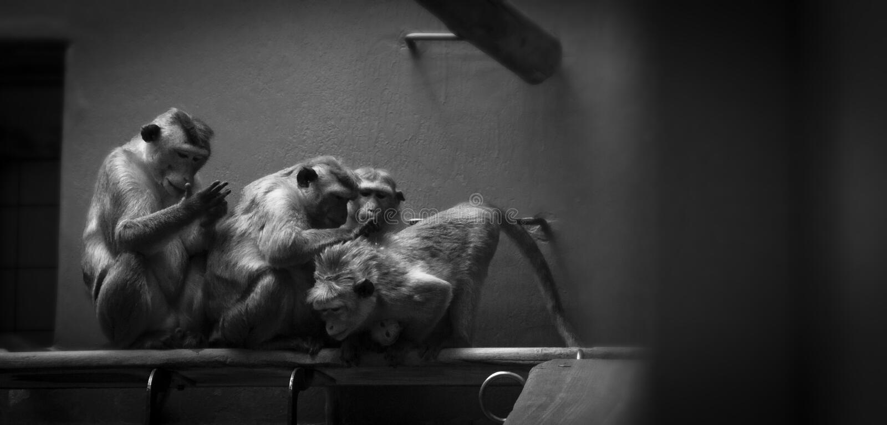 在动物园里模仿信条 免版税库存照片