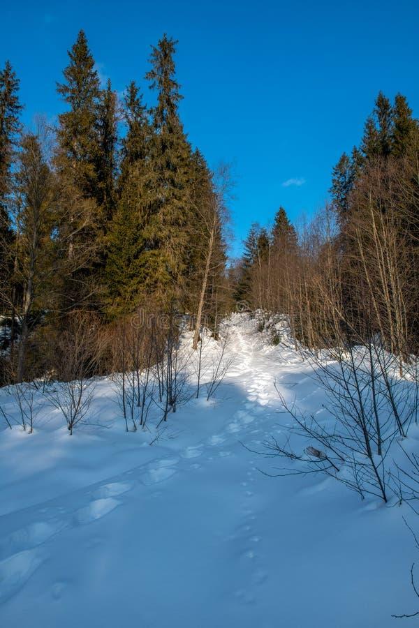 在动物足迹在冬天在森林里 库存图片
