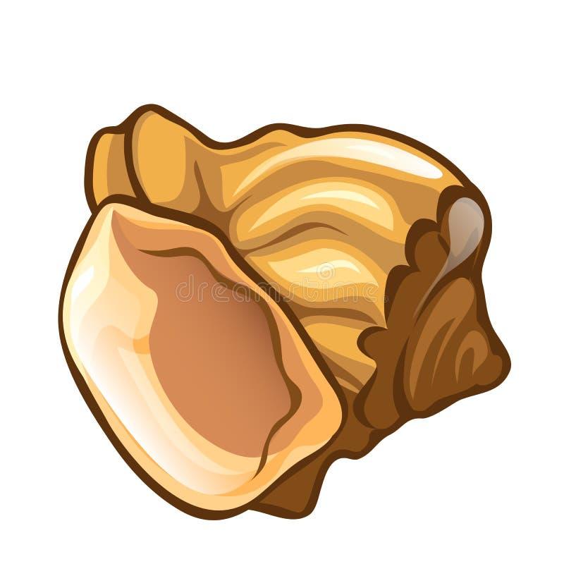 在动画片样式的贝壳特写镜头 扇贝自然海壳 蝴蝶 库存例证