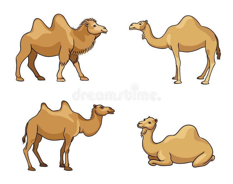 在动画片样式-传染媒介例证的骆驼图片