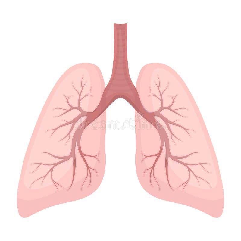 在动画片样式的肺象在白色背景 器官标志股票传染媒介例证 库存例证