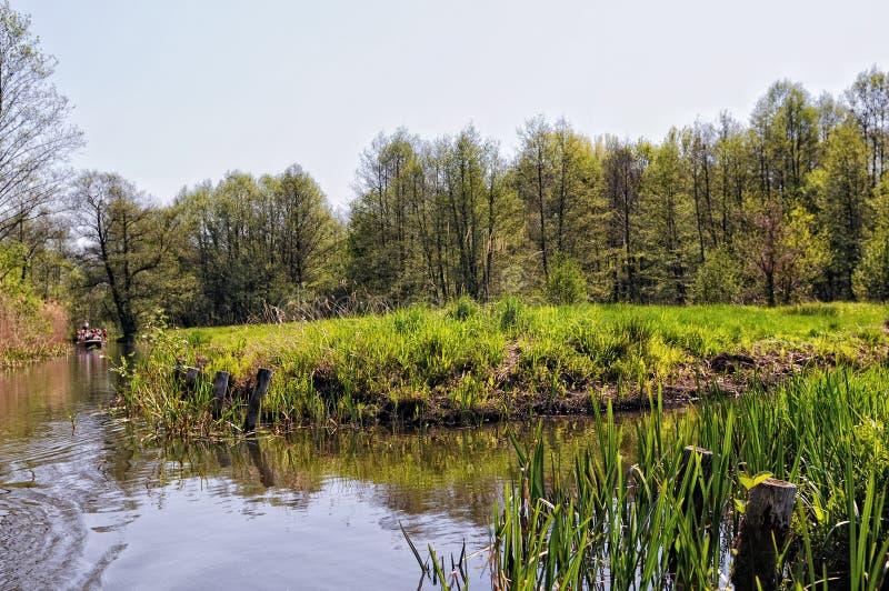 在勃兰登堡德国开化Spreewald森林风景  库存图片