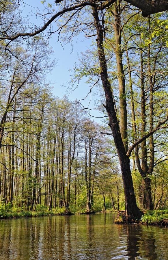 在勃兰登堡德国开化Spreewald森林风景  图库摄影